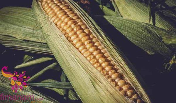 تفسير رؤية الذرة في المنام للحامل والعزباء والمتزوجه 3 In 2020 Sweet Corn Corn Vegetable Corn