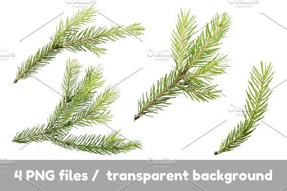 Pine Spruce Branches For Mockups Branch Transparent Background Scene Creator