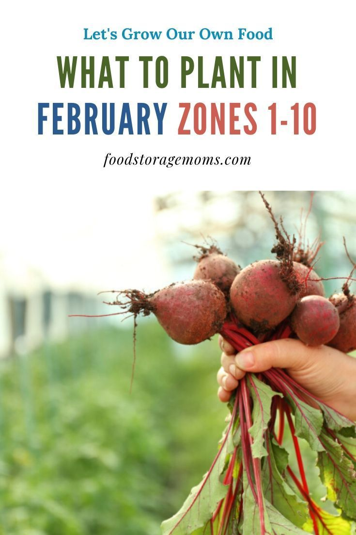 What To Plant In February Food Storage Moms When To Plant Vegetables Fall Garden Vegetables Plants