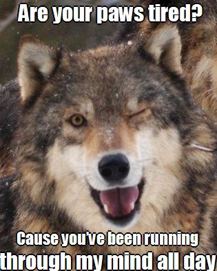 80 Best Images About Wolves On Pinterest Wolves A Wolf
