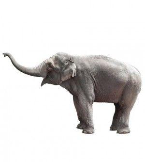 Prachtige muursticker van een grote olifant van KEK Amsterdam! Staat natuurlijk prachtig op de babykamer of kinderkamer.