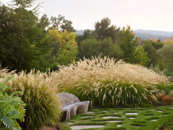 Image result for beautiful grasses in landscaping