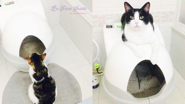 Hoje venho falhar-vos da casa de banho que temos em casa para os nossos gatos chama-se CatGenie e é de facto a melhor caixa de areia para gatos que existe. É uma casa de banho automática para gatos…