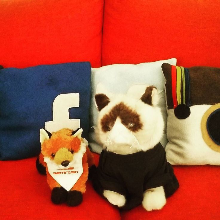 Grumpy Samo has a new friend  #semrushlive #inboundsamo #inbound #inboundmarketing #socialmedia #seo #inbound16 #smm #socialmediatips #semrush #semrushchat by studiosamo