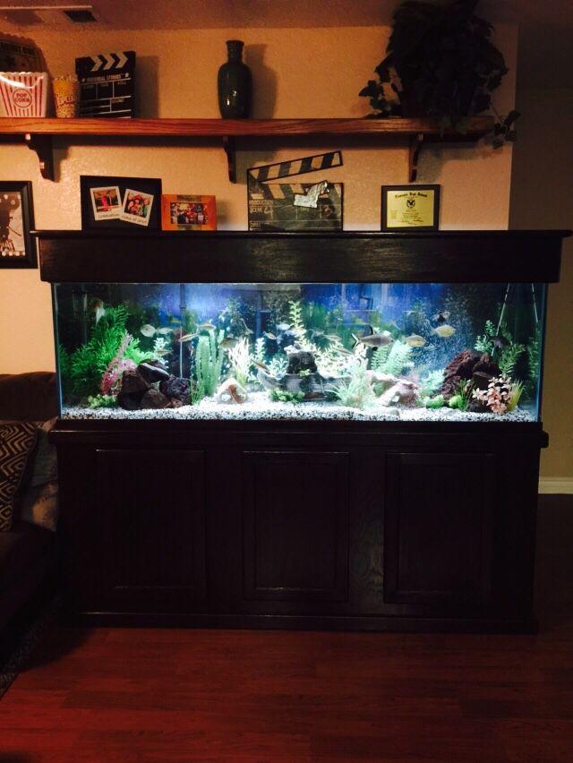 123 best Fish tank ideas images on Pinterest   Fish aquariums, Aquarium  ideas and Aquarium fish