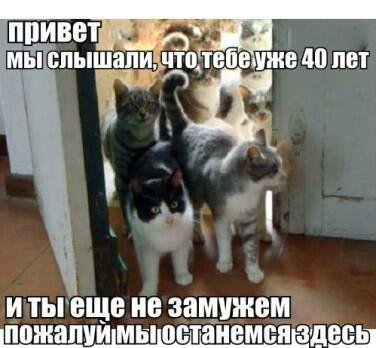 Независимые женщины и кошки | NetLore брак, женщины, кошки ...
