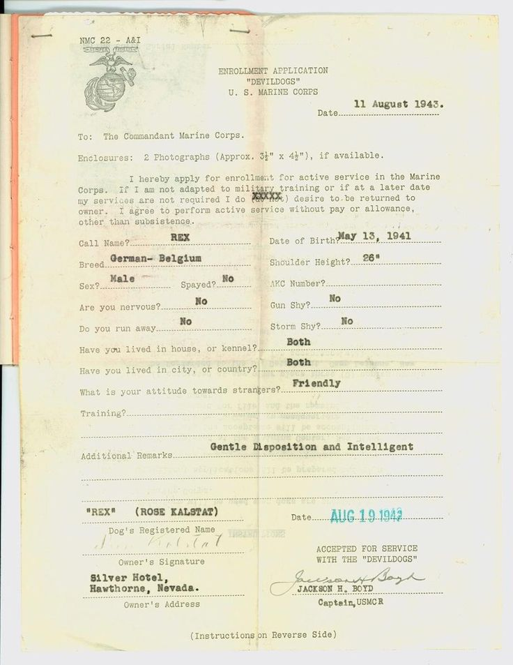 A WWII Marine Corps Personality Quiz for Prospective Canine - enrollment form