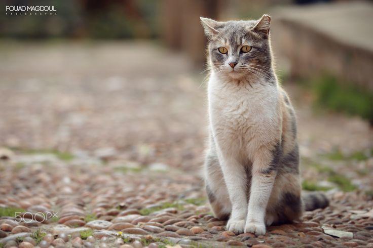 Cat - null