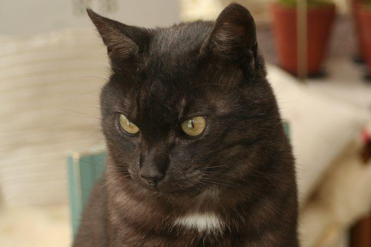 Strandhagen B&Bs youngest handsome catboy.