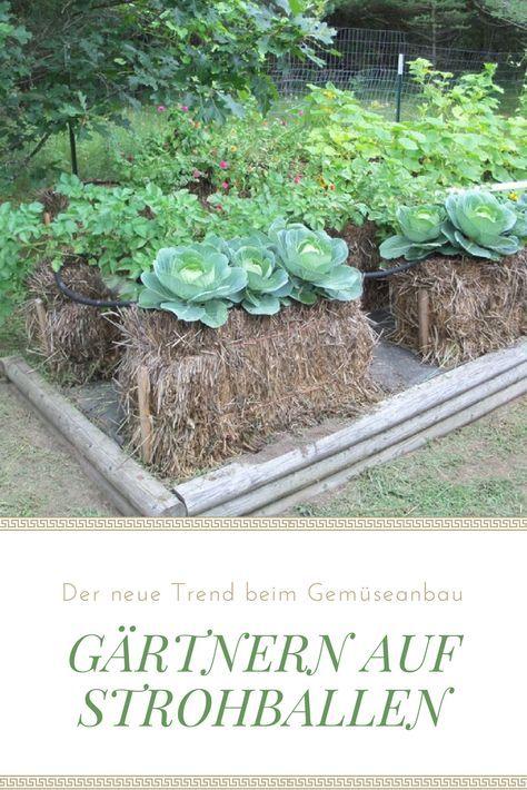 Ähnlich wie Hochbeete, das Gärtnern auf Strohballen macht es möglich, Gemüse selbst auf schlechten Böden oder auf dem Balkon anzubauen. Erfahren Sie mehr dazu im heutigen Artikel!