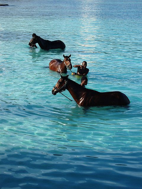 Barbados - horses. We saw this when having breakfast in our hotel when in Barbados before. We'd never seen horses in the sea before and my mum FREAKED thinking they were drowning haha.