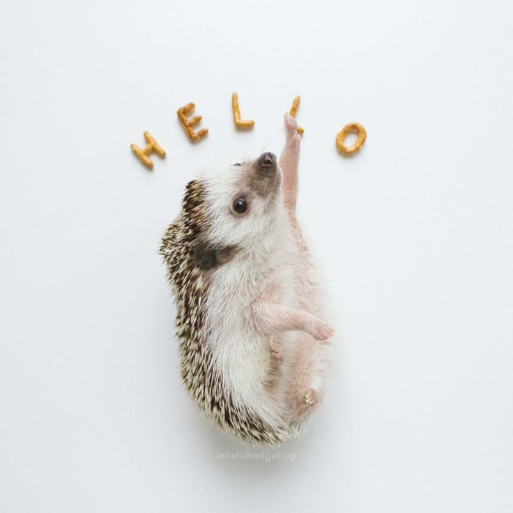 Cuteness overload! Hello #ameliahedgehog. This is the first page of the 2016 Calendar. You can find it here.