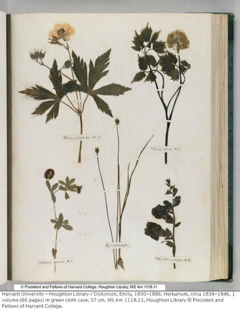 emily dickinson, herbarium – 69 фотографий