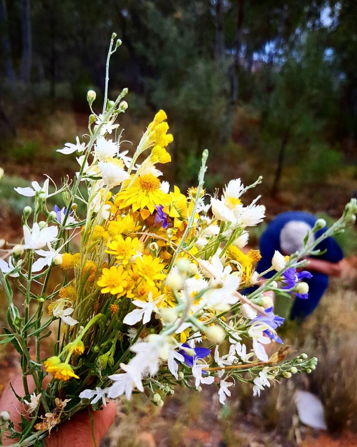 """48 Likes, 1 Comments - Gayle & Mike Quarmby (@outbackpridefresh) on Instagram: """"#wildflowers"""""""