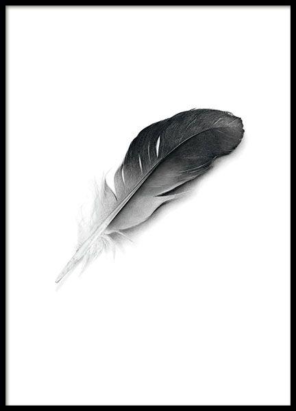 Poster tmet mooie zwarte veer. Posters met zwart-wit fotografie. www.desenio.nl