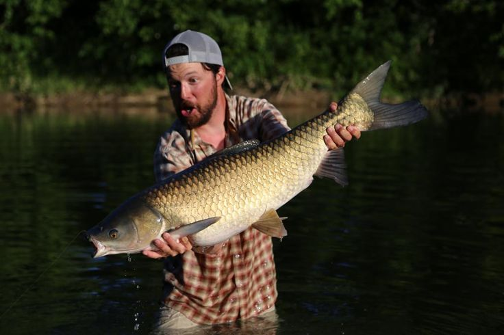 Ben Levin Wrangles a Rare Crooked Creek Grass Carp | The Ozark Fly Fisher Journal