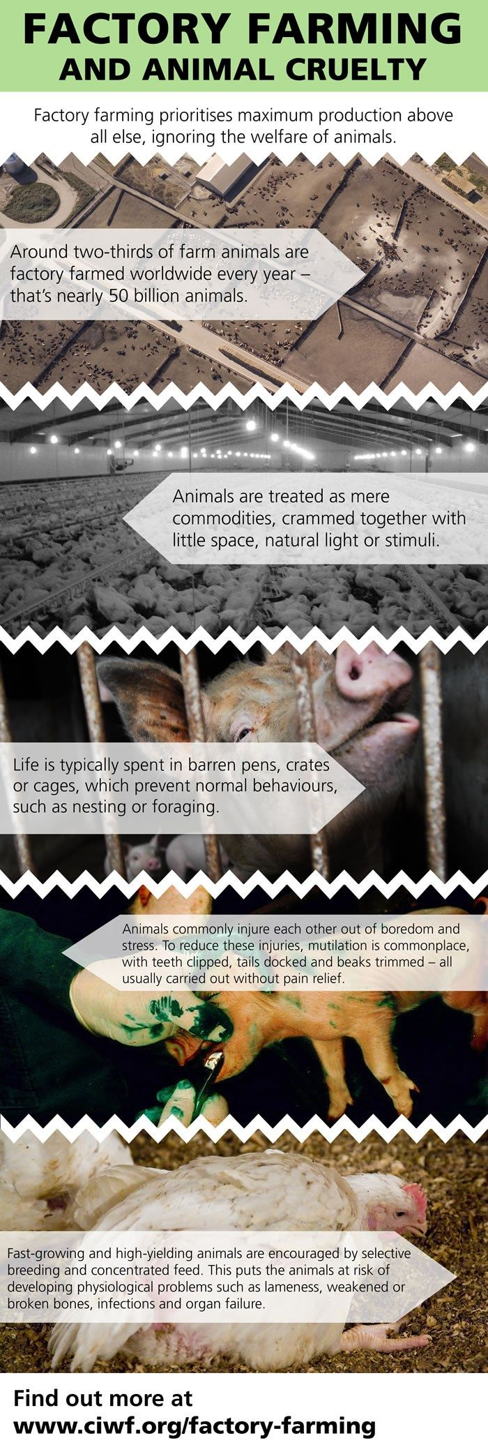 17 best images about intensive animal farming food not to think about where your groceries come from is the top technique marketers in the food industry rely on to hid the cruelty behind factory farming