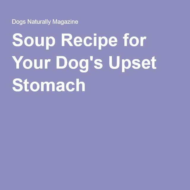 Can I Feed My Dog Homemade Soups