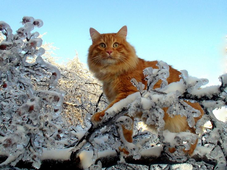 Смешные фото и видео кошек (А почему кошаки на аватаре?) - LOL