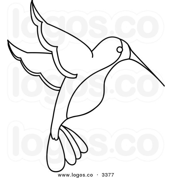 Royalty Free Vector of a Black and White Outlined Hummingbird Logo