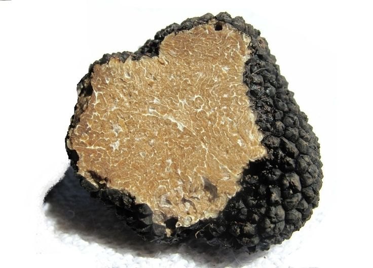 "Tuber aestivum(Summer #Black #truffle) from Alba. It matures from June to November, and has elliptical and dark spores, warty black rind, its pulp can be from yellowish to bronze and emanates a faint scent. This is one of the #most #used #truffles by #chefs, easier to find, if compared with the white truffle. #Pasta, #eggs and simple ingredients are good partners for this summer black ""pearl"".  Buy it on Italian Food Joy. www.italianfoodjoy.de www.italianfoodjoy.com"