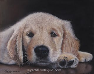 Golden Retriever Puppy Pastel Painting - Carole Rodrigue Fine Artist Specializing in Pet Portraits and Still Life: #pets #petlovers #giftideasforpetlovers  #goldenretrievers #goldenretrieverpuppy #realisticdogart #goldenretrieverpainting #pastelpainting #retrievers
