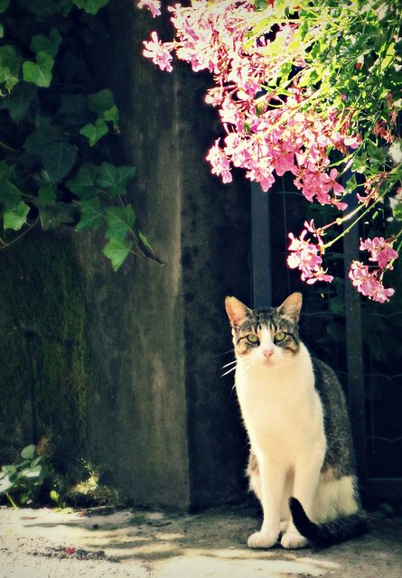 """** """" Yaz, me be from dis neighborhood and haz everys rite to be here, justs likes yoo."""""""