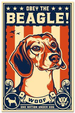 Obey the Beagle! American Beagle