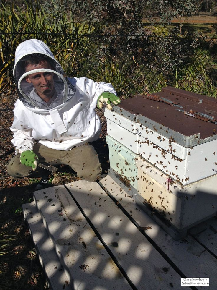 Mitchell with the repositioned hives in Ainslie