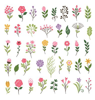 Colorful floral collection with leaves and flowers vector 4382598 - by Lenlis on VectorStock®