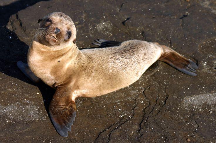 Guida alle isole Galapagos - Come organizzare al meglio il viaggio