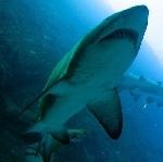 Shark Attack In South Africa: Shark Attacks, Sharks Attack