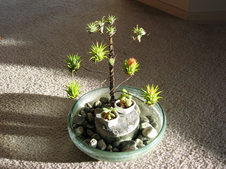 Air Plants Boogeyman Nurseries Pinterest And Plant Display