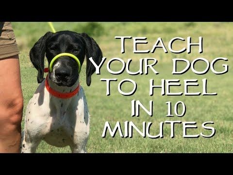 This List Of Dog Obedience Commands Is Filled With Commands The