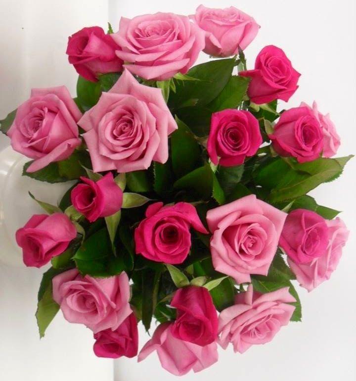 64 best images about roses on pinterest facebook blue. Black Bedroom Furniture Sets. Home Design Ideas