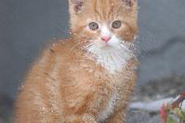 Qué hacer con las almohadillas secas en las patas de los gatos | Muy Fitness