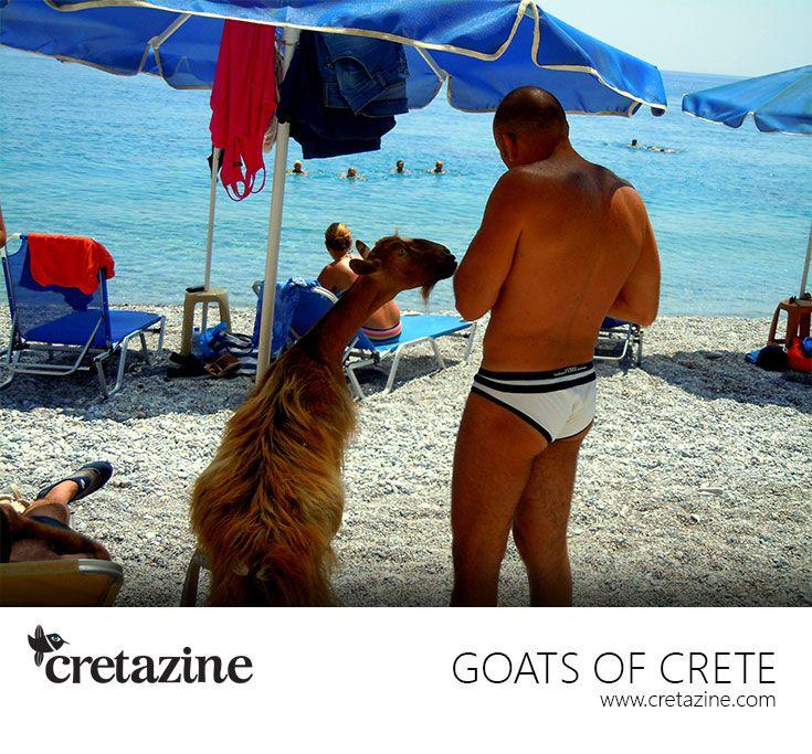 Goat in Love! A sweet summer affair at Glyka Nera beach #Crete. You can claim her, here: http://cretazine.com/en/crete/travel-explore/beaches/item/241-glyka_nera