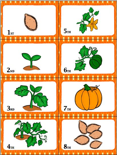 card game - fun way to review the life cycle of a pumpkin