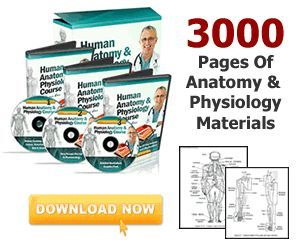 Online Anatomy and Physiology Review Course that will help you master the subjec