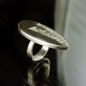Orthocerus Ring 1