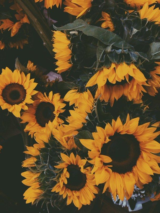 dark, background, flowers, grunge, nature