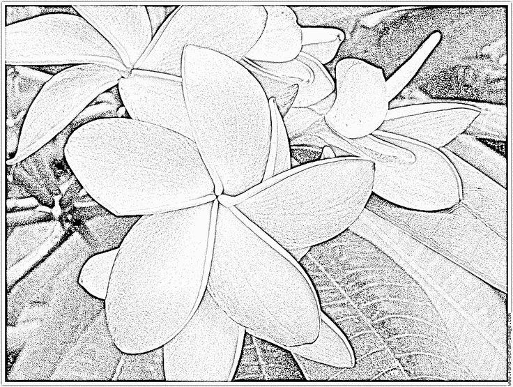 Imprimer Coloriage Arbre Fleurs Roses