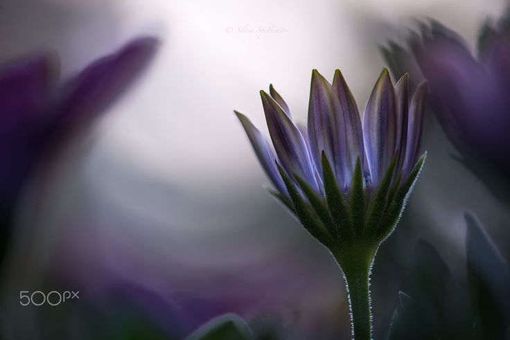 Hope by Silvia Spedicato on 500px