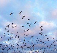 'cause i love birds