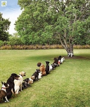 The line for the tree...