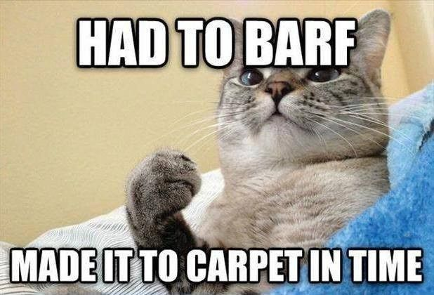 TOP 32 Funny Cats and Kittens Pictures | Funny Animals, Funny Cat | DomPict.com
