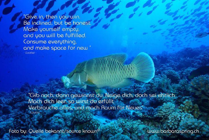 """#www.barbaraspring.ch #www.facebook.com/barbara.spring.9  """"In dem Masse, wie wir unseren Kopf von alten, längst durchlebten Geschichten leeren, entstehen neue Räume, und eine geheimnisvolle Freude fliesst dort hinein. Unsere Intuition entwickelt sich, wir werden mutiger, riskieren mehr, tun, was uns in den Sinn kommt, ohne lange zu fragen, ob es richtig oder falsch ist"""" (Paulo Coelho, Der Zahir)"""