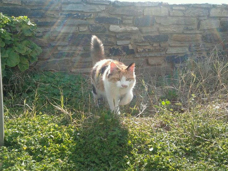 My beautiful cat Milou !!!
