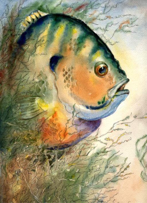 Bluegill Fish Watercolor 11x14 Art print by artist Barry Singer. $20.00, via Etsy.