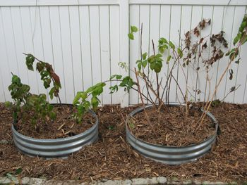 An Easy Raised Bed  really good for keeping raspberry bushes from spreading roots